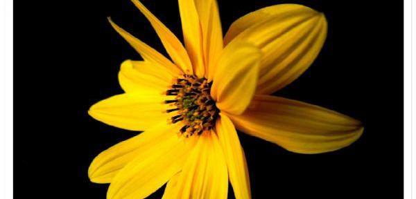 Splendore-giallo.jpg